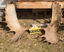 Sky-High-Ranch-moose-antlers-with-Clue-Card